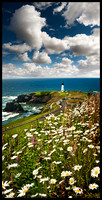 JULY 2011 IMAGE OF THE MONTH - YAQUINA HEAD IN BLOOM